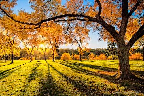 秋天的美丽日记100字 秋天的美丽日记600字